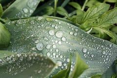 sund fjäder för ny gräsgreen Fotografering för Bildbyråer