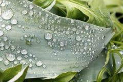 sund fjäder för ny gräsgreen Royaltyfri Bild