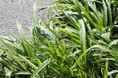 sund fjäder för ny gräsgreen Arkivbilder