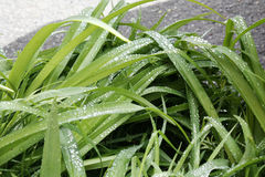 sund fjäder för ny gräsgreen Royaltyfri Foto