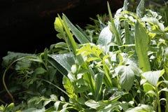 sund fjäder för ny gräsgreen Royaltyfria Foton
