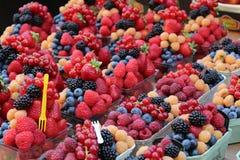 Sund fruktsallad mycket av vibrerande färger Royaltyfria Foton