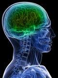 sund hjärna stock illustrationer