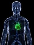 sund hjärta vektor illustrationer