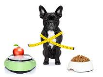 sund hund Arkivfoton