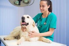 Sund hund under medicinsk examen royaltyfri foto