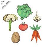 sund mat grönsaker för vektor för eps-mapp bland annat Arkivfoton