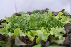 Sund mat med nya ingredienser för sallad royaltyfria foton