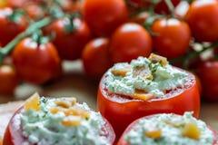 Sund röd tomataptitretare Arkivfoto