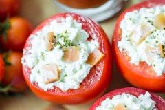 Sund röd tomataptitretare Arkivbild