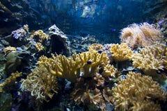 sund rev för korall royaltyfria foton