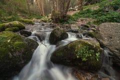 Sund skogflod Fotografering för Bildbyråer