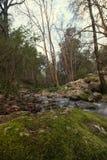 Sund skogflod Arkivfoton