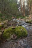 Sund skogflod Royaltyfri Fotografi