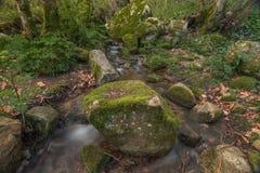 Sund skogflod Royaltyfri Bild