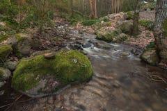 Sund skogflod Royaltyfri Foto