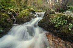 Sund skogflod Arkivbild