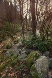 Sund skogflod Royaltyfria Foton