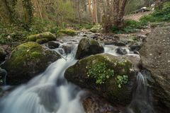 Sund skogflod Royaltyfria Bilder