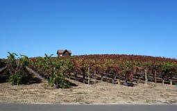 Sund vingård Royaltyfria Bilder