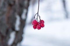 Sunda bär som väntar i skogen Royaltyfria Foton
