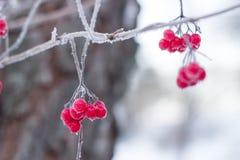Sunda bär som väntar i skogen Royaltyfri Foto