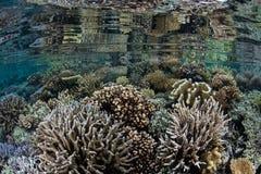 Sunda koraller avspeglade i lugna vatten i Raja Ampat arkivfoton