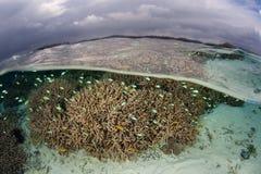 Sunda koraller och moln i Solomon Islands royaltyfri foto