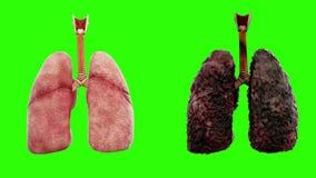Sunda lungor och sjukdomlungor på den gröna skärmen roterar Obduktionläkarundersökningbegrepp Cancer och rökaproblem stock illustrationer