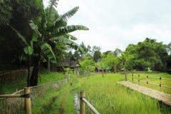 Sundanese verde Fotografía de archivo