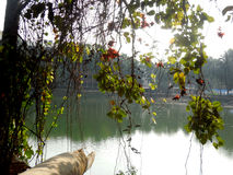 Sundarban美洲红树森林 库存图片