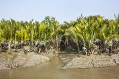 Sundarban royalty-vrije stock afbeeldingen