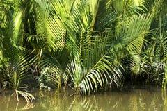 Sundarban stock foto