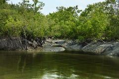 Sundarban stock fotografie
