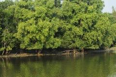 Sundarban stock afbeeldingen