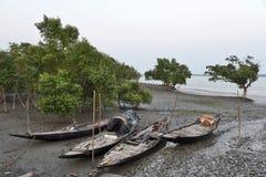 Sundarban Imágenes de archivo libres de regalías