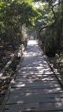 Sundarban 库存照片