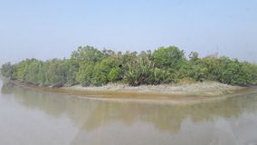 Sundarban 免版税库存图片