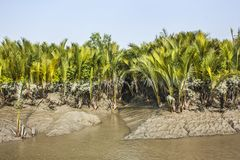Sundarban Royalty Free Stock Images