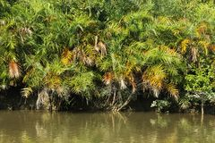 Sundarban Royalty Free Stock Photography