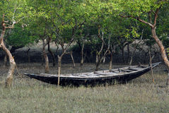 Sundarban in India Stock Image
