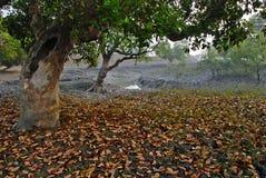 Sundarban in Indien lizenzfreie stockbilder