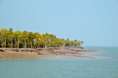 Sundarban landscape Royalty Free Stock Photo