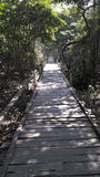 Sundarban. Narrow wooden path of forest Stock Photo
