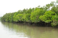 Sundarbans royalty-vrije stock afbeelding