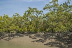 Sundarbans Fotografia Royalty Free