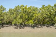 Sundarbans Zdjęcie Royalty Free