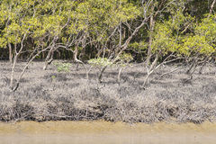 The Sundarbans royalty free stock photos