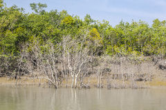 The Sundarbans Royalty Free Stock Photography