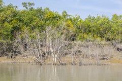 Sundarbansen Royaltyfri Fotografi